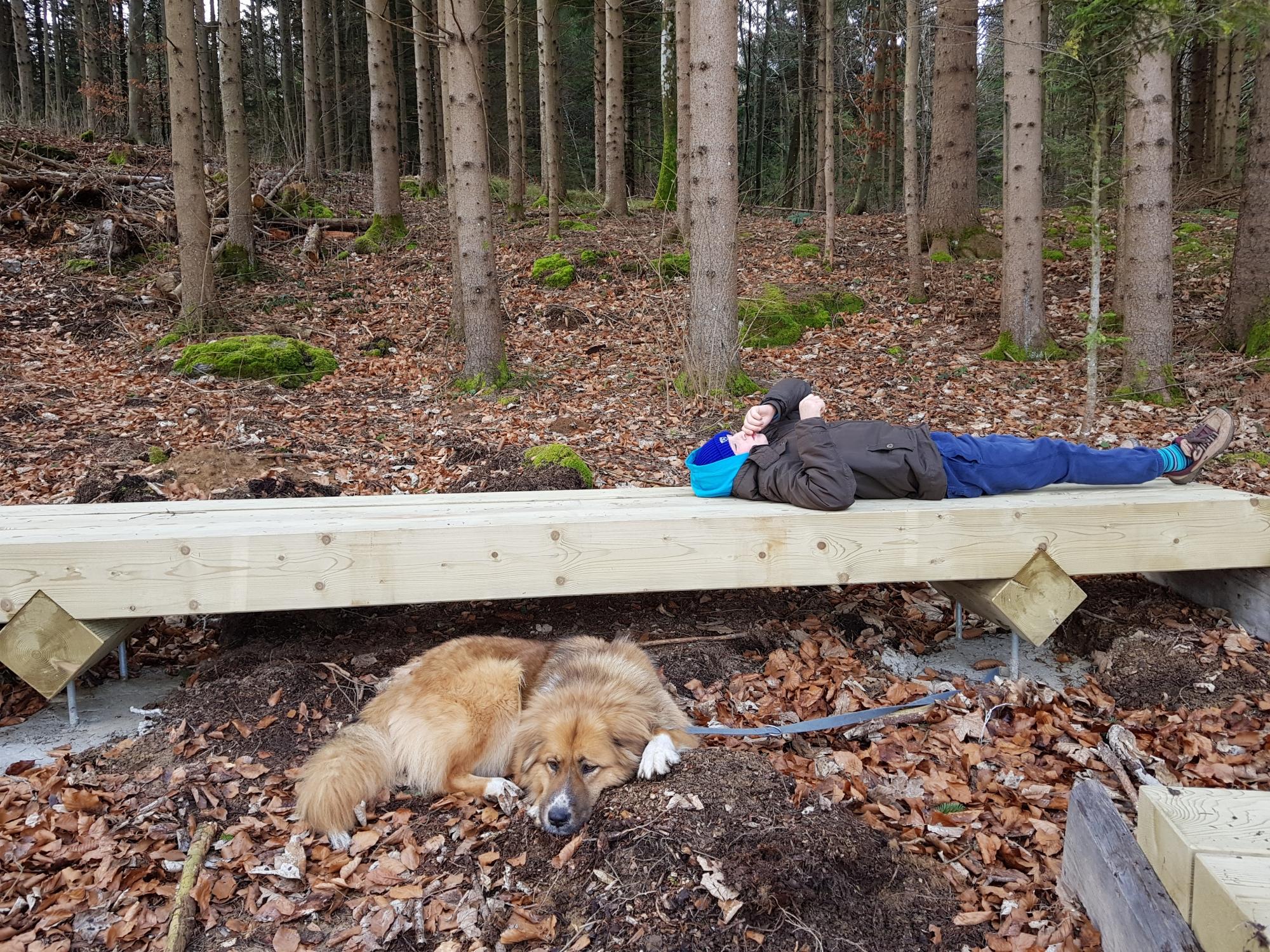 Prijeten počitek pod krošnjami na poti Drvošec