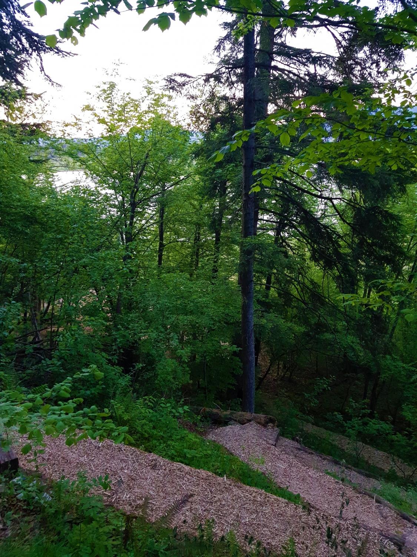 Potka po strmem pobočju vodi cik-cak. Foto Eva Kobe