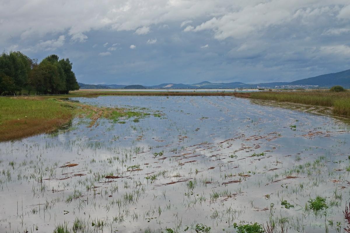 Stržen, glavni vodotok Cerkniškega jezera, je močno narasel