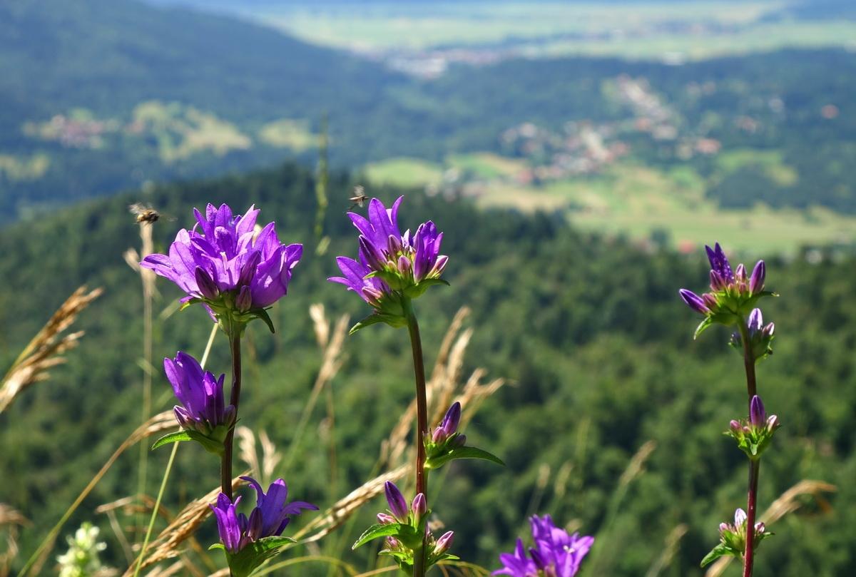 Park želi preprečiti širjenje okužbe s COVID-19. Foto Tine Šubic