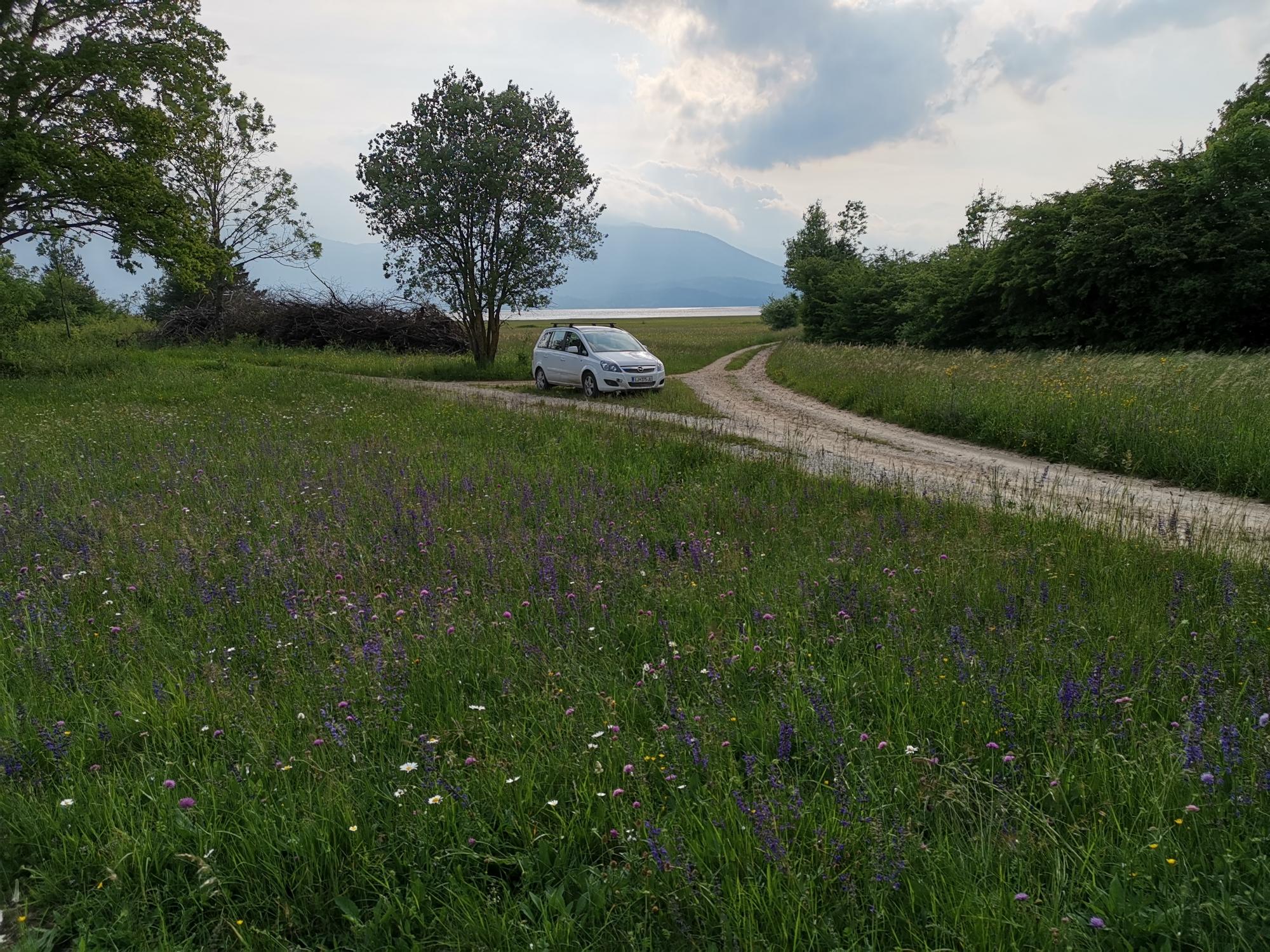 Fotografija travnika na Cerkniškem jezeru. Foto: Tomaž Jančar