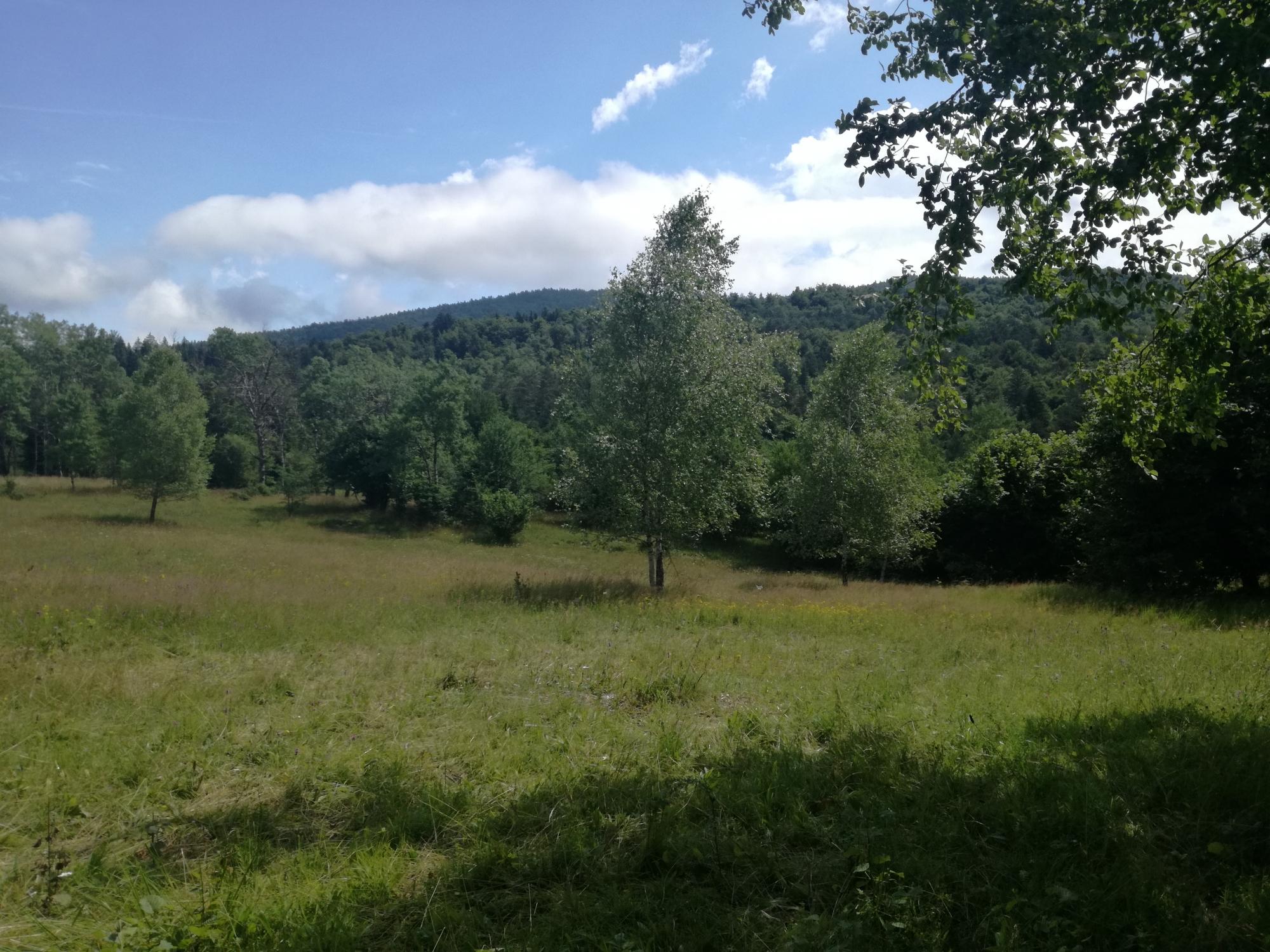 Travnik na Brejnicah je bil še nedolgo tega povsem zaraščen z grmovnimi vrstami. Ker je bila že zelo zgodaj opuščena košnja na teh površinah. Notranjski park se ga je odločil kupiti, zato, da bi tu ohranili edinstveno naravo, metulje in nekatere vrste orhidej.
