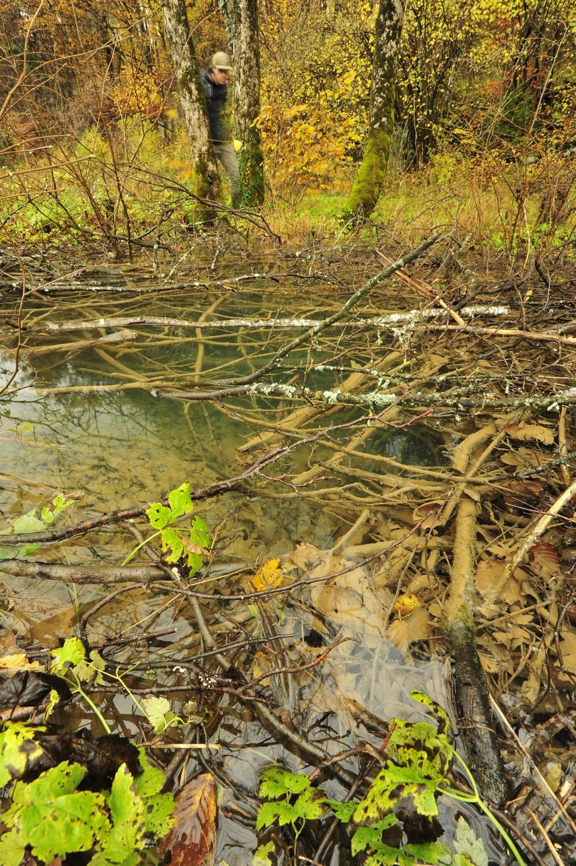 Del Poti izvirov je pozimi pod vodo
