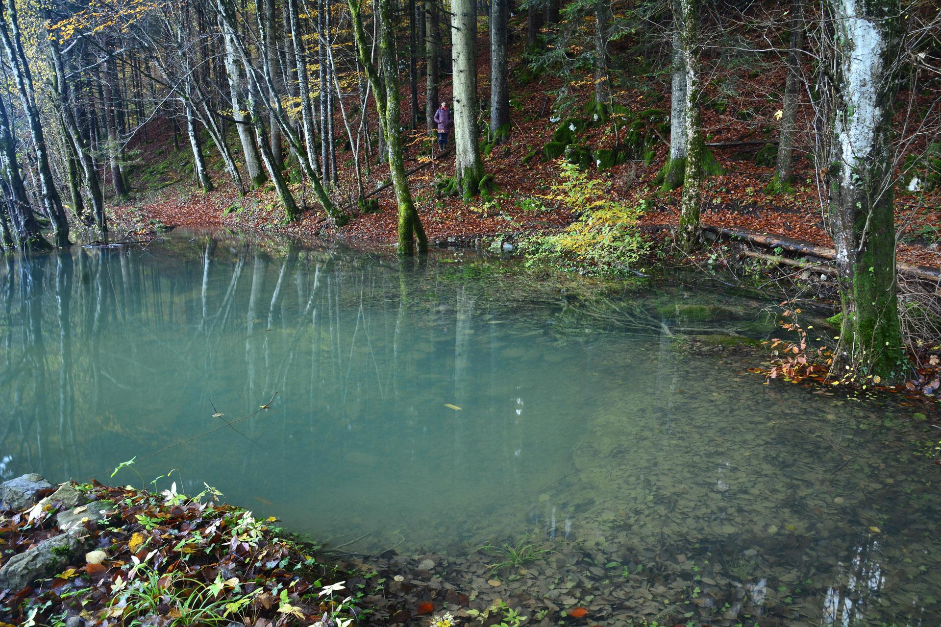 Mokrišča s svojo zalogo vode blagodejno vplivajo na podnebje v okolici in blažijo velika temperaturna nihanja in ekstremne vremenske pojave, kot so suše in toča. Foto: Jošt Stergaršek