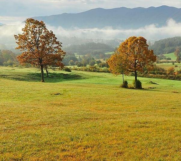 Menišija je gozdnata visoka kraška planota med Cerkniškim in Planinskim poljem