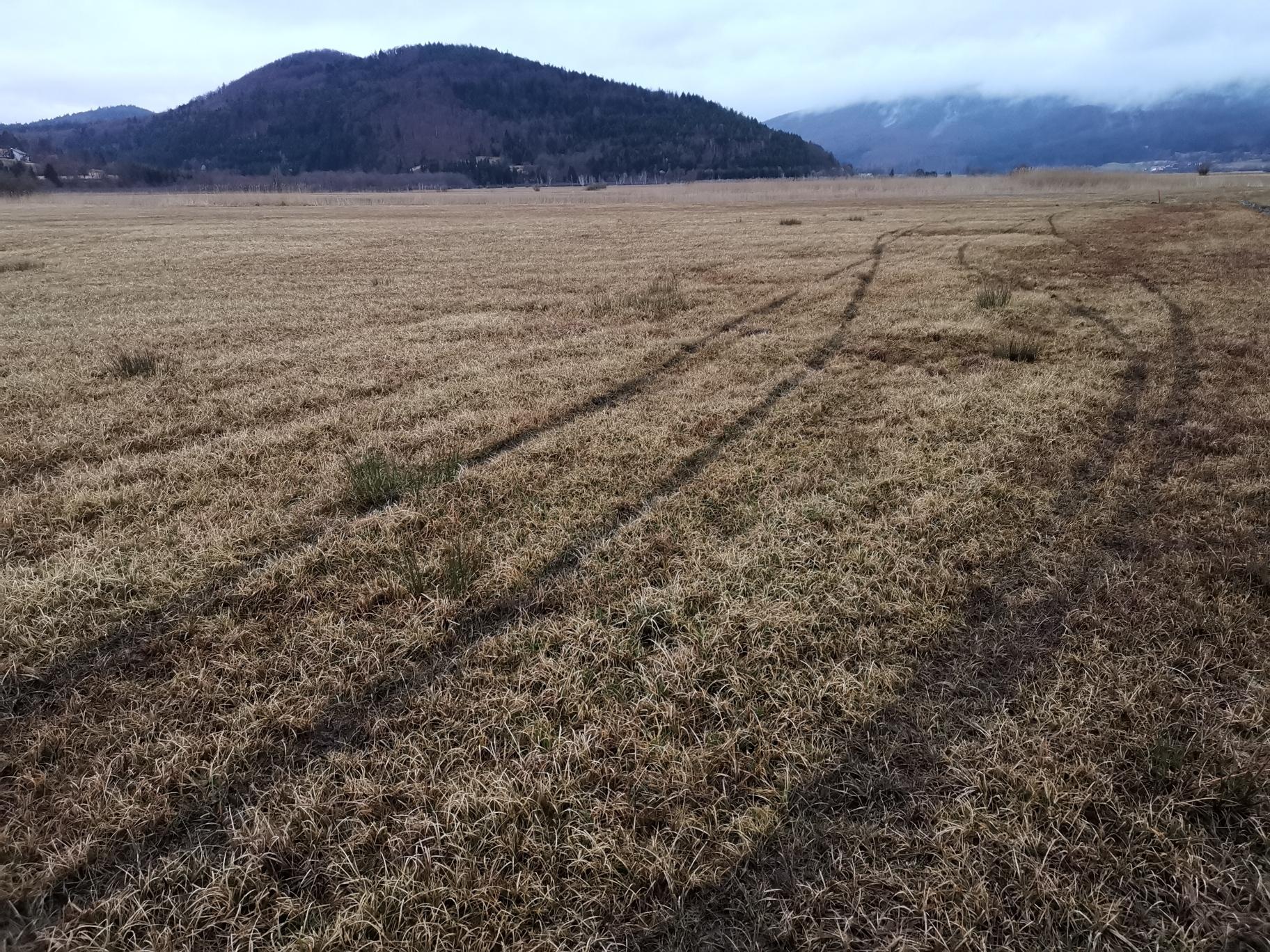 To so najboljši travniki za gnezdenje koscev v državi. Prvi kosci bodo kmalu gnezdili tu. In sledovi štirih motoristov.
